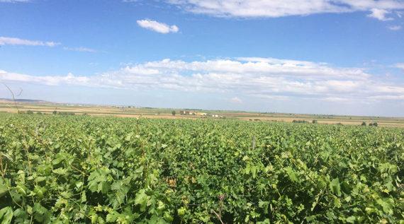 Zamora y el vino